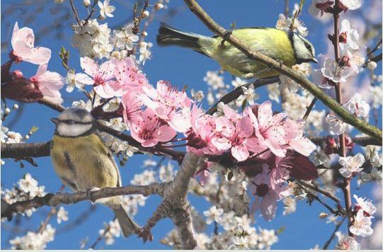 Version d 39 installation for Oiseaux de jardin au printemps